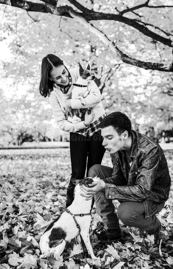 Pares jovenes que juegan con los perros al aire libre en otoño fotos de archivo libres de regalías