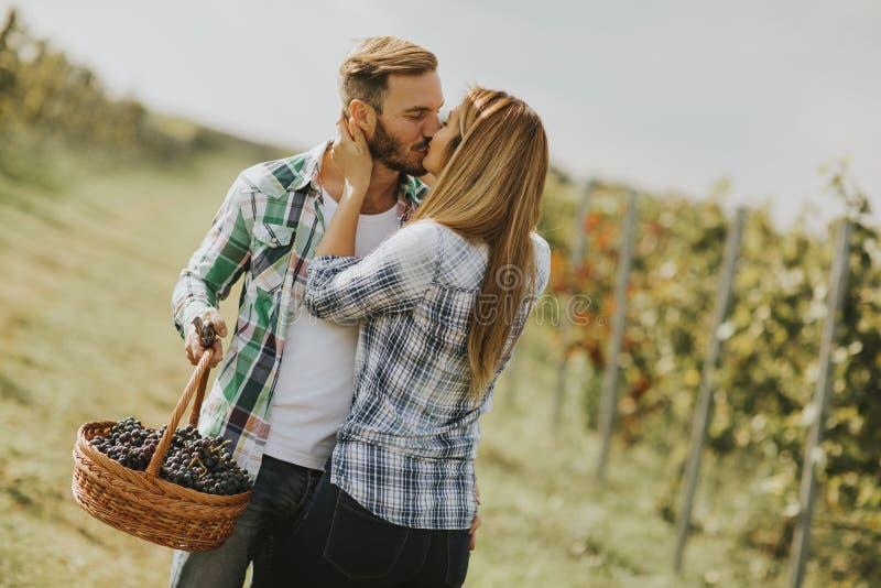 Pares jovenes que se besan en un viñedo fotografía de archivo libre de regalías