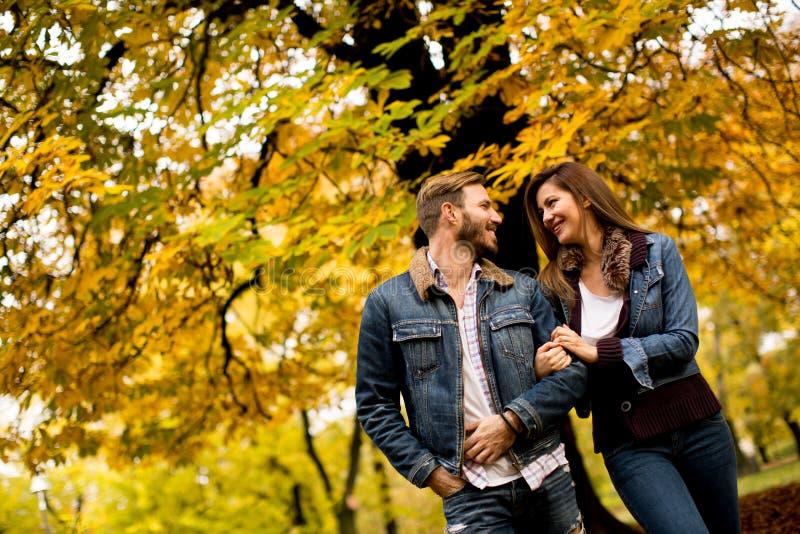 Pares loving no parque do outono foto de stock