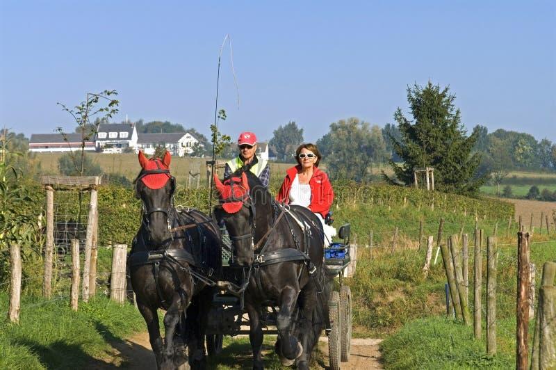 Pares mais velhos que montam um cavalo e um transporte imagem de stock royalty free