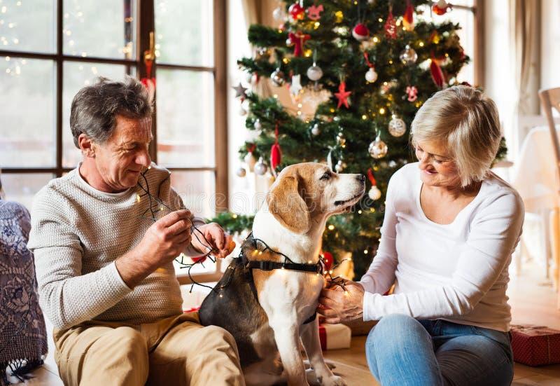 Pares mayores con el perro delante del árbol de navidad imagen de archivo