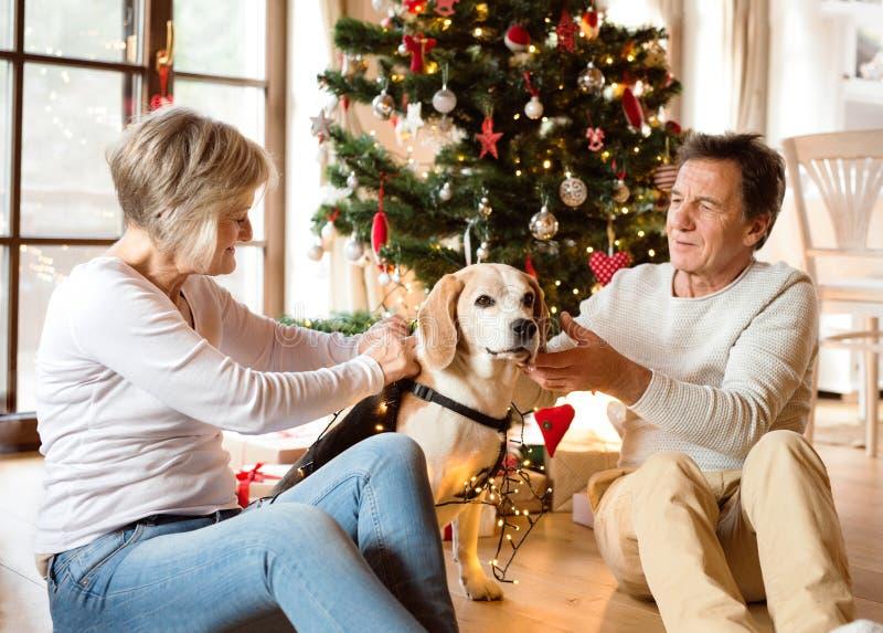 Pares mayores con el perro delante del árbol de navidad foto de archivo