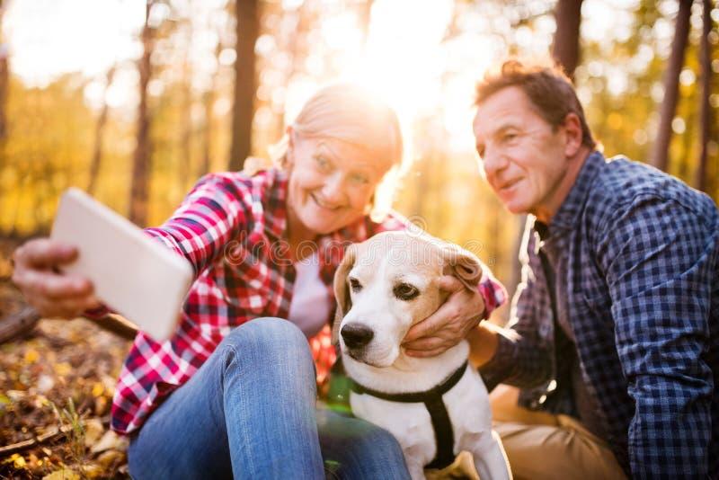 Pares mayores con el perro en un paseo en un bosque del otoño foto de archivo libre de regalías