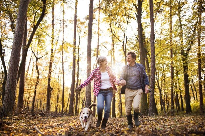 Pares mayores con el perro en un paseo en un bosque del otoño imagenes de archivo