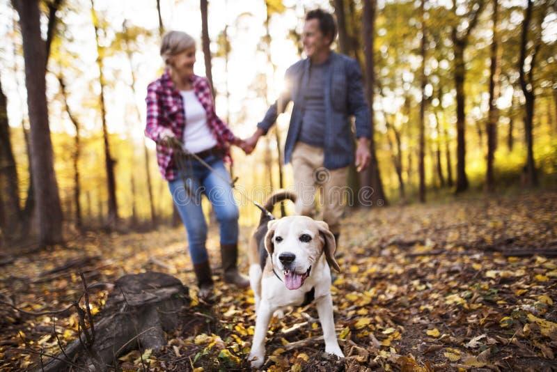 Pares mayores con el perro en un paseo en un bosque del otoño fotos de archivo libres de regalías