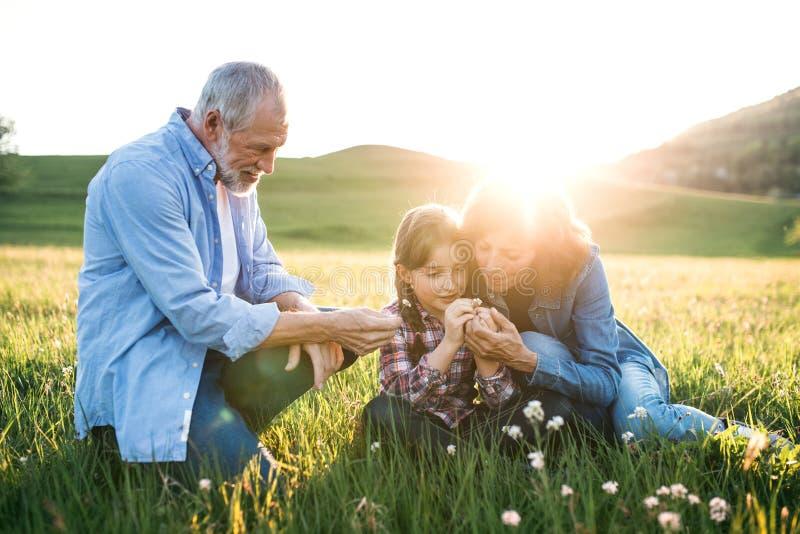 Pares mayores con la nieta afuera en naturaleza de la primavera en la puesta del sol foto de archivo