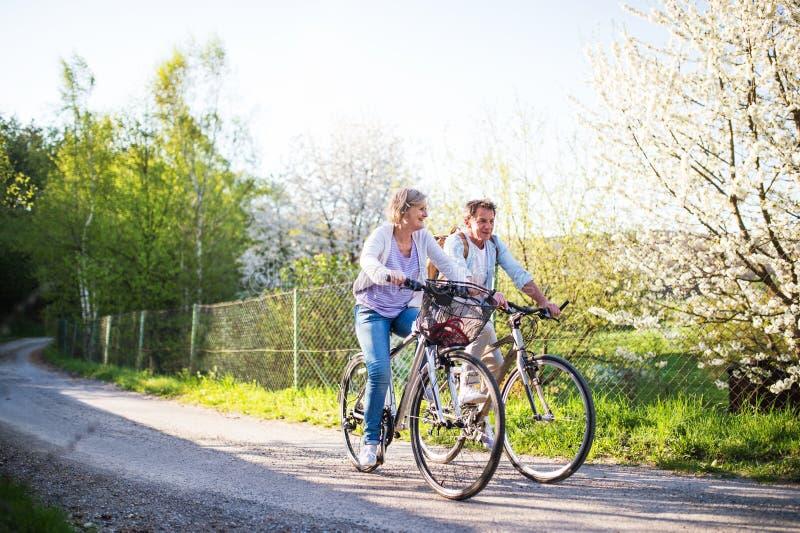 Pares mayores con las bicicletas afuera en naturaleza de la primavera foto de archivo libre de regalías