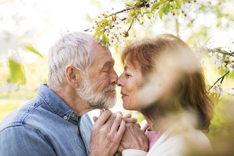 Pares mayores en amor afuera en besarse de la naturaleza de la primavera imagen de archivo