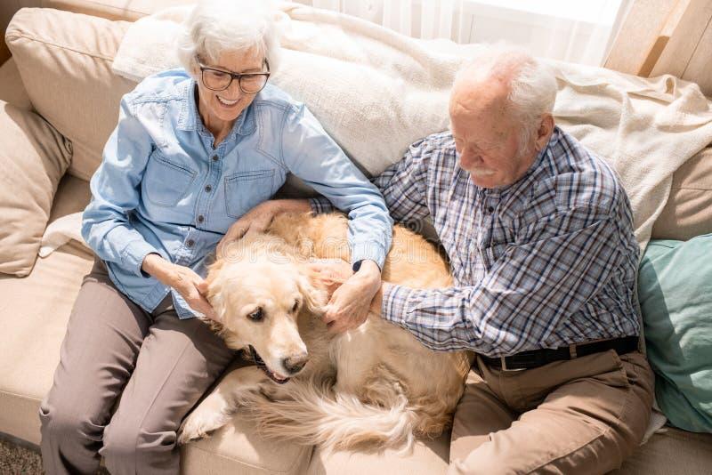 Pares mayores felices con el animal doméstico foto de archivo