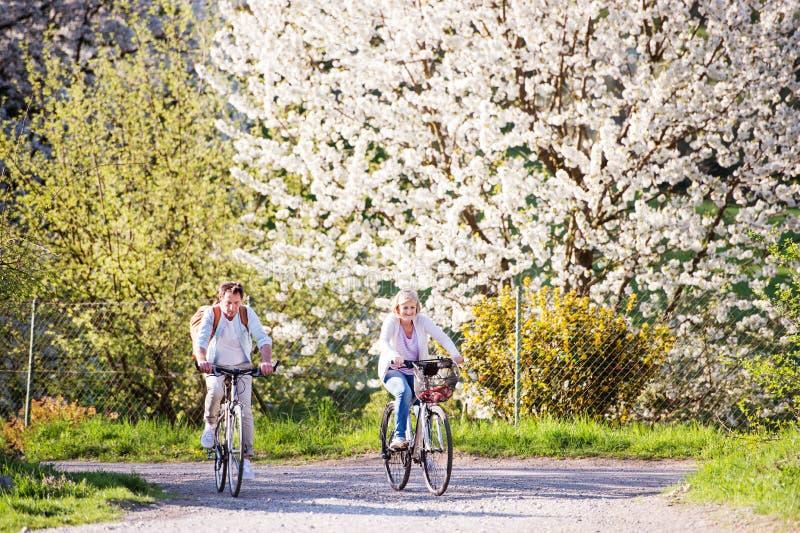 Pares mayores hermosos con las bicicletas afuera en naturaleza de la primavera fotografía de archivo