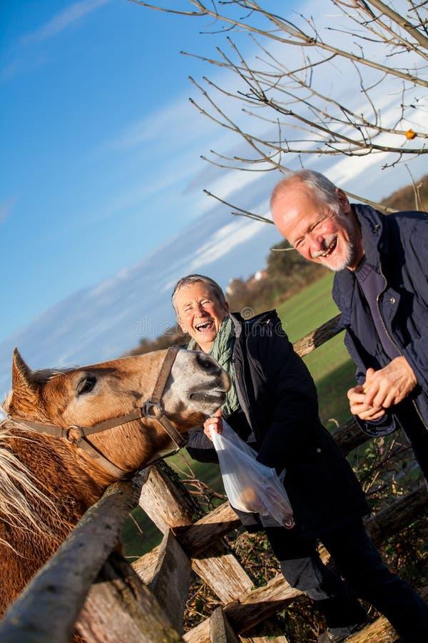 Pares mayores que acarician un caballo en un prado imagenes de archivo