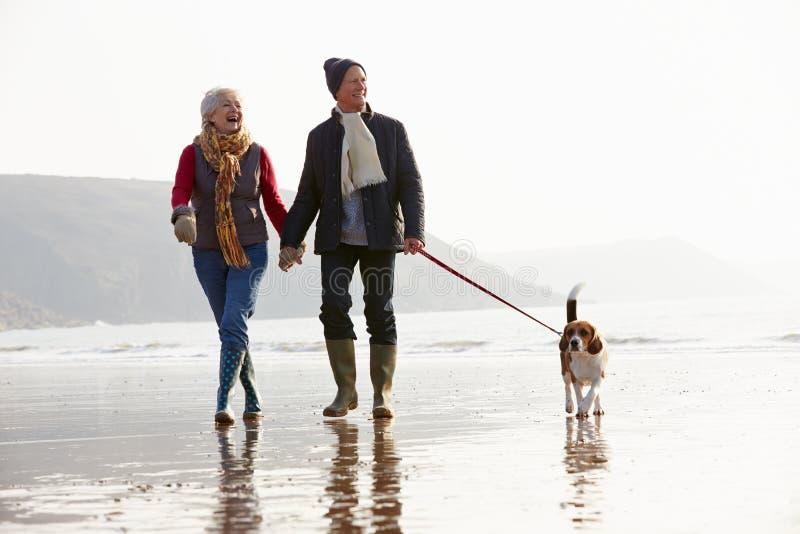 Pares mayores que caminan a lo largo de la playa del invierno con el perro casero imagen de archivo libre de regalías