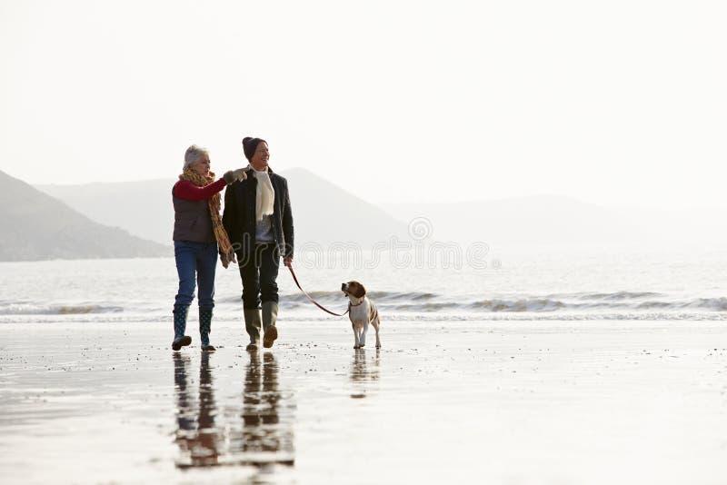Pares mayores que caminan a lo largo de la playa del invierno con el perro casero imagenes de archivo
