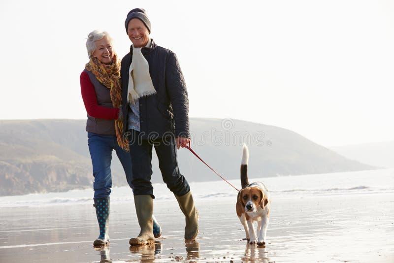 Pares mayores que caminan a lo largo de la playa del invierno con el perro casero fotografía de archivo