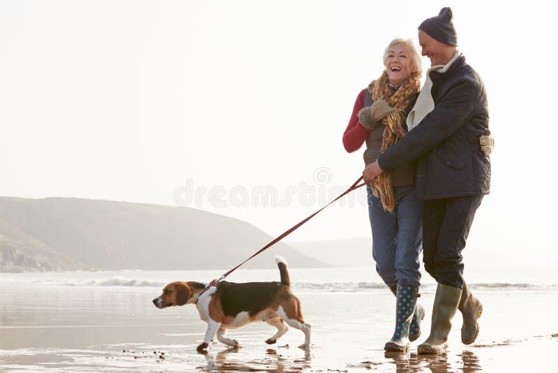 Pares mayores que caminan a lo largo de la playa del invierno con el perro casero foto de archivo libre de regalías