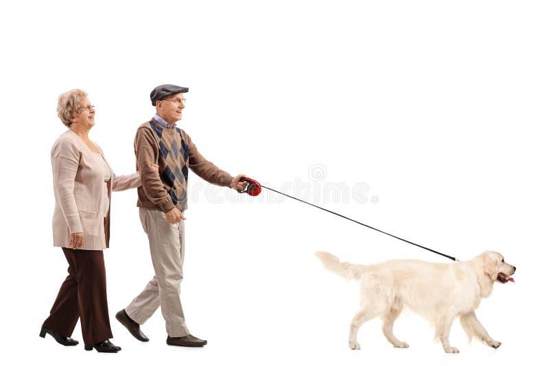 Pares mayores que caminan un perro imagen de archivo libre de regalías