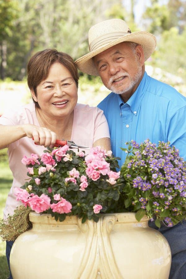 Pares mayores que cultivan un huerto junto imagen de archivo libre de regalías
