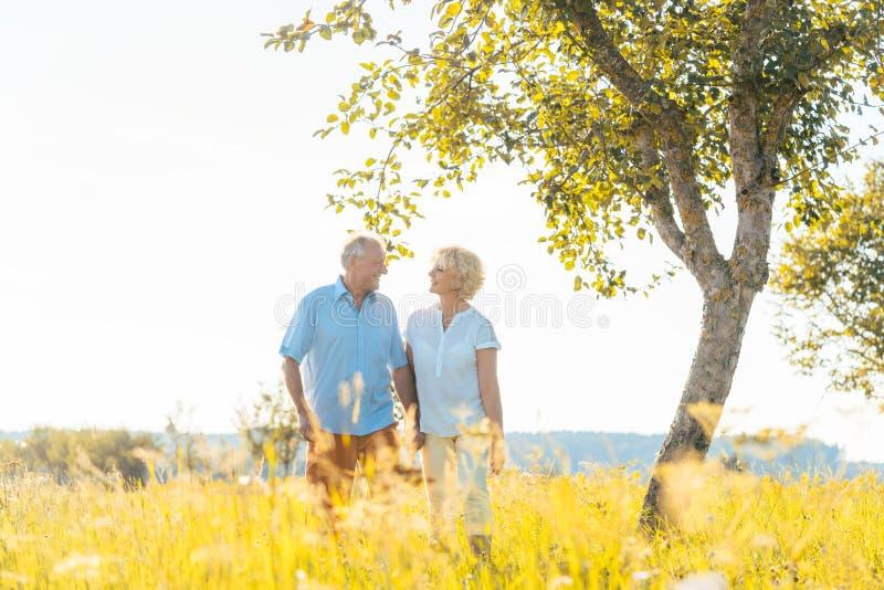 Pares mayores románticos que llevan a cabo las manos mientras que camina junto en un campo foto de archivo libre de regalías