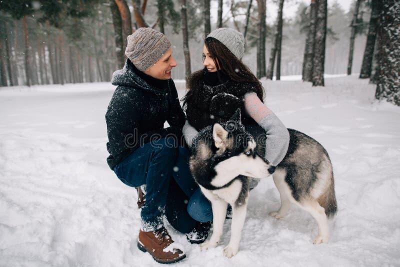 Pares no amor com o cão ronco que anda na floresta do inverno imagens de stock