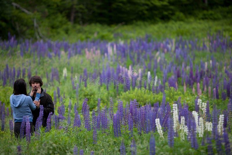 Pares no amor que abraça em flores do Lupine imagens de stock royalty free