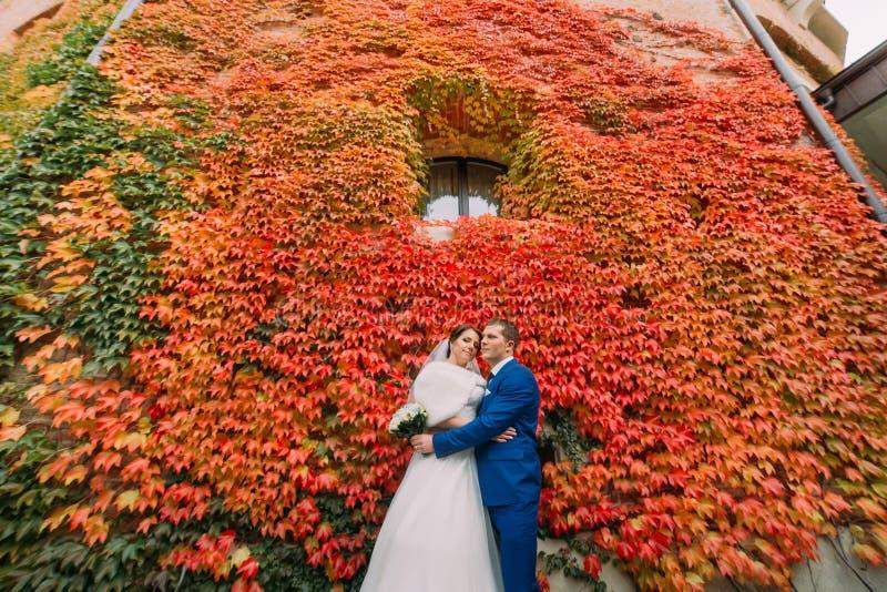 Pares, novia elegante y novio hermosos de la boda presentando en parque cerca de la pared con la planta roja del arrastramiento imágenes de archivo libres de regalías