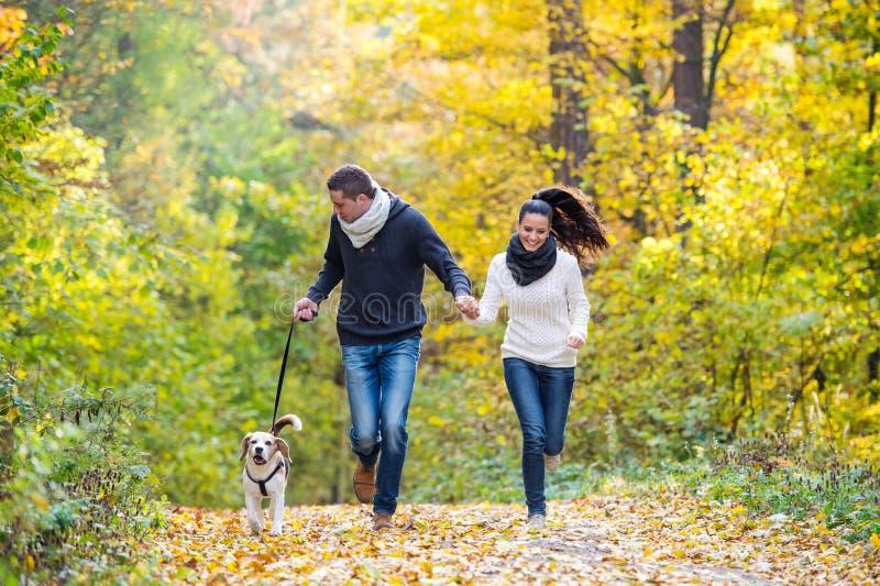Pares novos bonitos com o cão que corre na floresta do outono imagem de stock royalty free