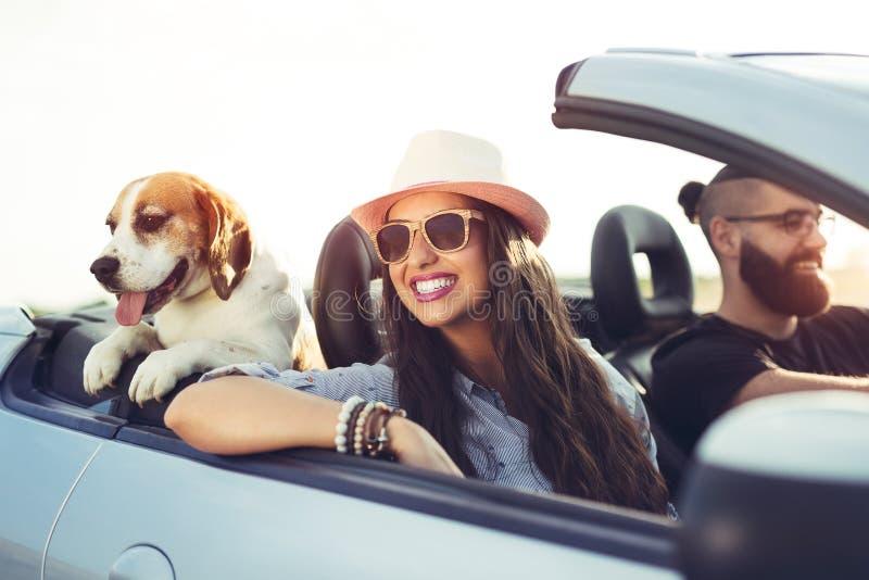 Pares novos com um cão que conduz em um convertible fotografia de stock