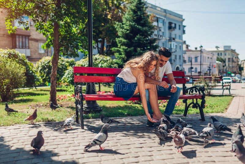 Pares novos da raça misturada em bidrs de alimentação do amor no parque do verão Pão thowing do homem e da mulher às pombas foto de stock royalty free