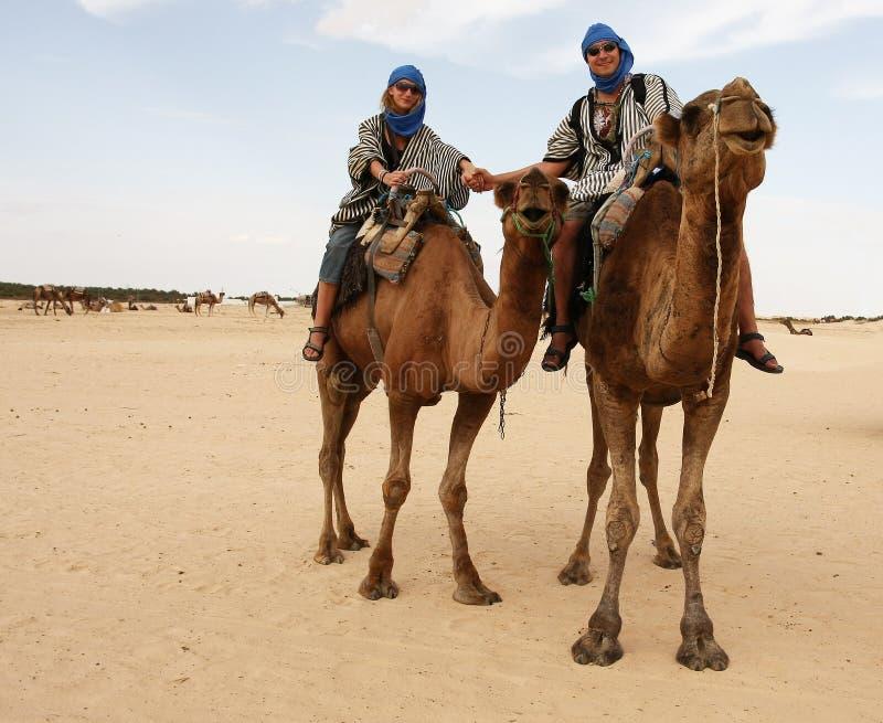 Pares novos em camelos imagens de stock royalty free