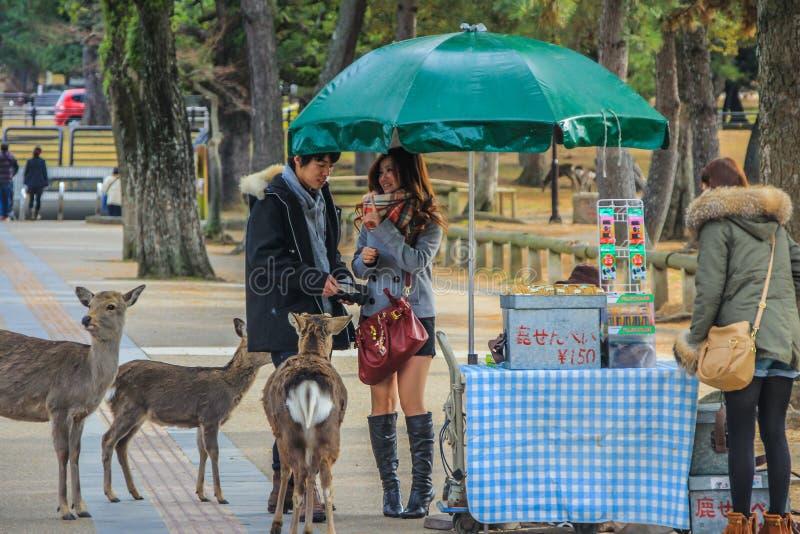 Pares novos no amor que vai alimentar cervos no parque fotografia de stock royalty free