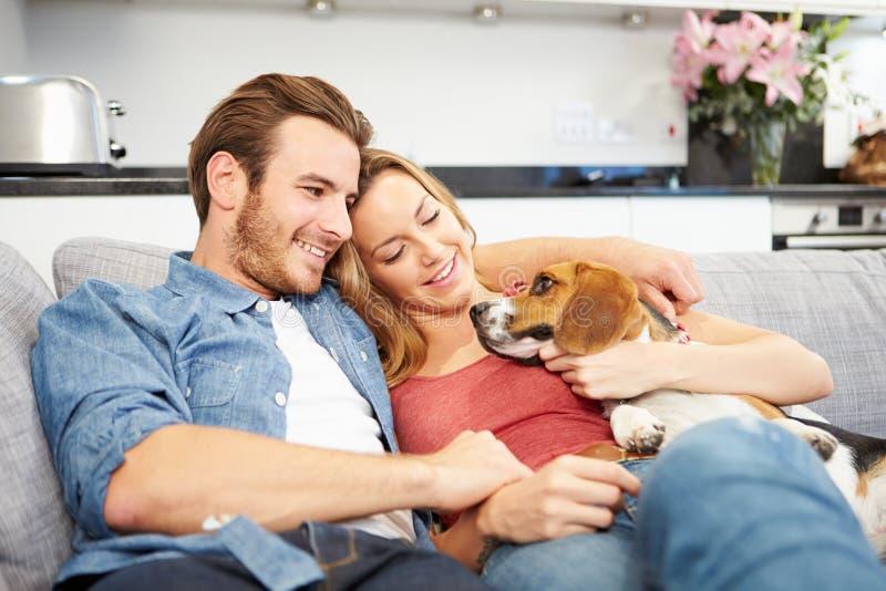 Pares novos que jogam com cão de estimação em casa fotografia de stock