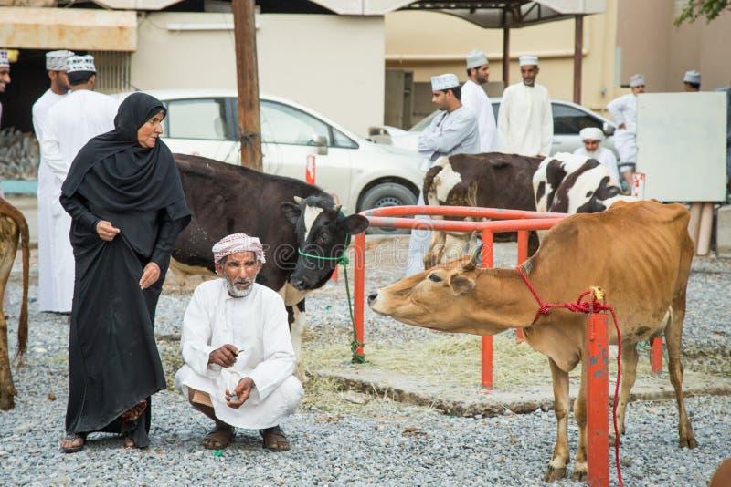 Pares omanenses velhos com sua vaca imagem de stock