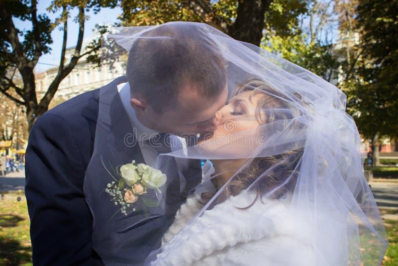 Pares que beijam sob o véu imagens de stock