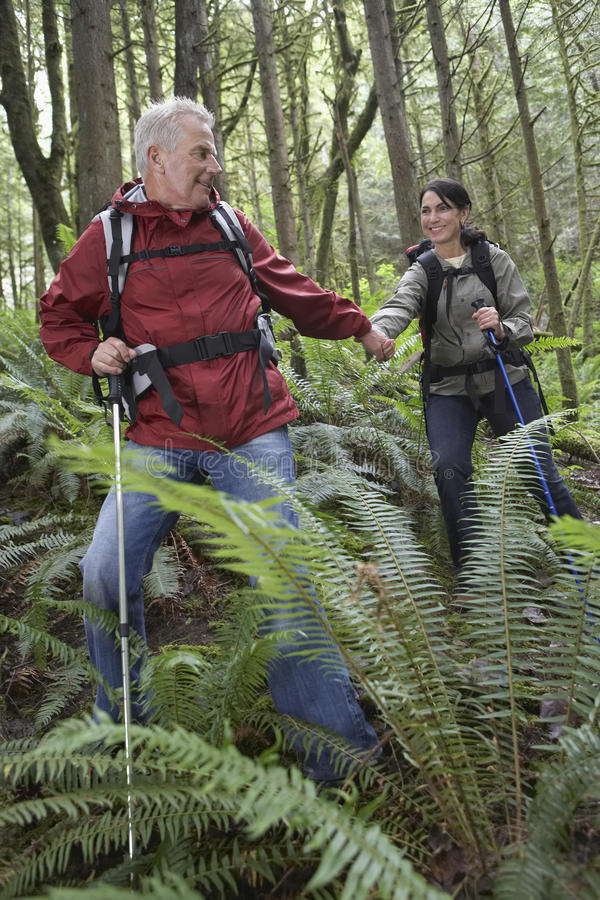 Pares que guardam as mãos e que andam na floresta fotos de stock royalty free