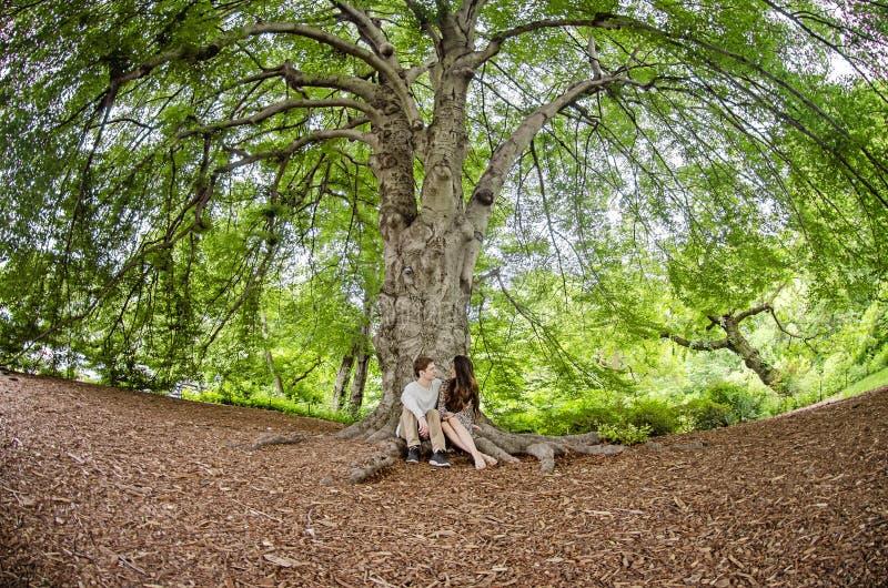 Pares que hablan debajo de un árbol grande fotos de archivo libres de regalías