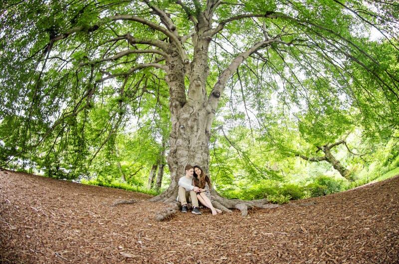 Pares que hablan debajo de un árbol grande imagen de archivo libre de regalías