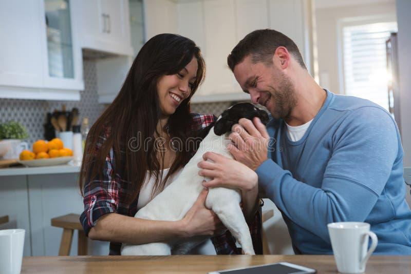 Pares que jogam com seu cão de estimação na cozinha fotografia de stock royalty free