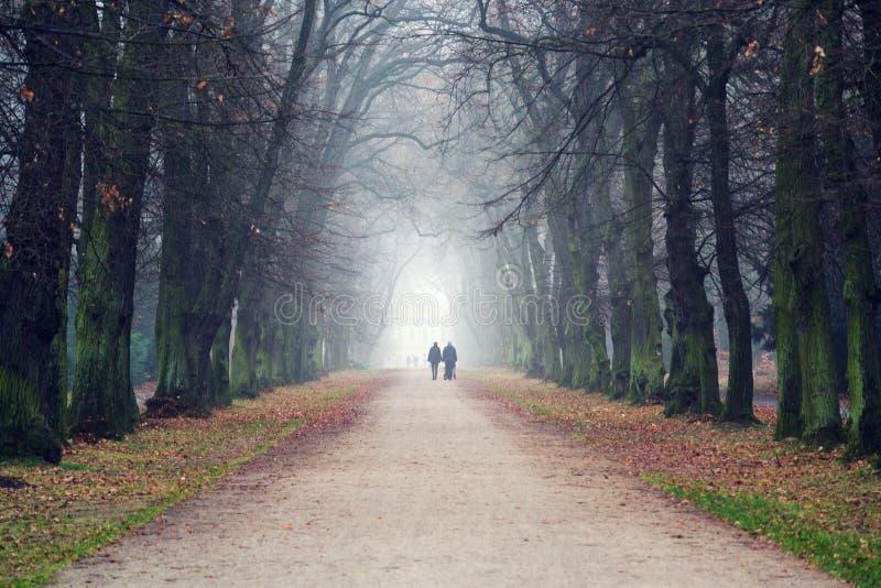 Pares que llevan a cabo las manos que caminan en callejón romántico hermoso del otoño, día de niebla nublado, concepto de la rela imagenes de archivo