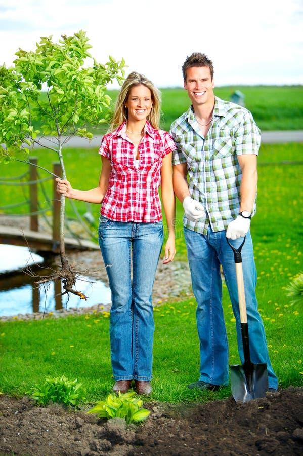 Pares que plantam uma árvore foto de stock