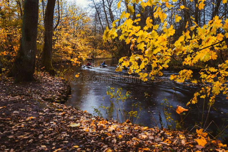 Pares que remam no caiaque no rio da floresta Lago da floresta do outono cercado pelos membros e pelas folhas dourados no dia do  fotos de stock