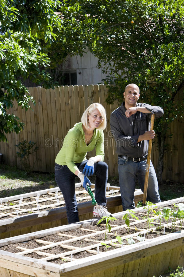 Pares que trabajan en el jardín vegetal en patio trasero imagen de archivo