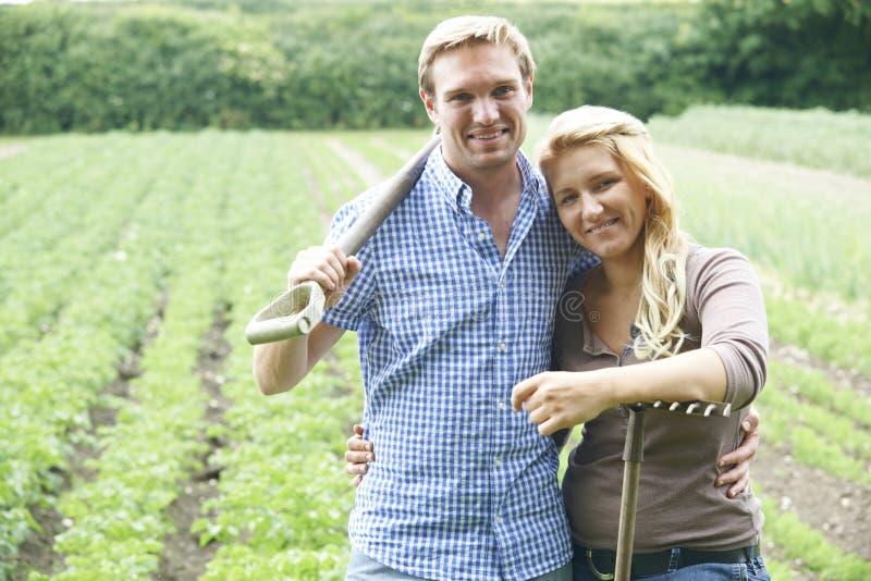 Pares que trabalham no campo na exploração agrícola orgânica imagem de stock royalty free