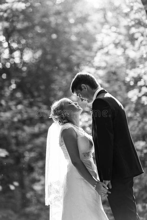 Pares románticos hermosos de la boda que se besan y que abrazan al aire libre fotografía de archivo