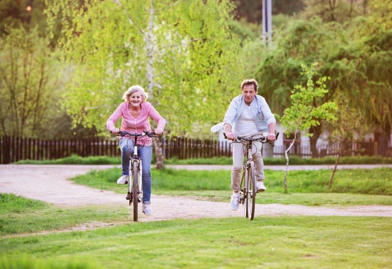 Pares superiores bonitos com bicicletas fora na natureza da mola, dando um ciclo fotografia de stock royalty free