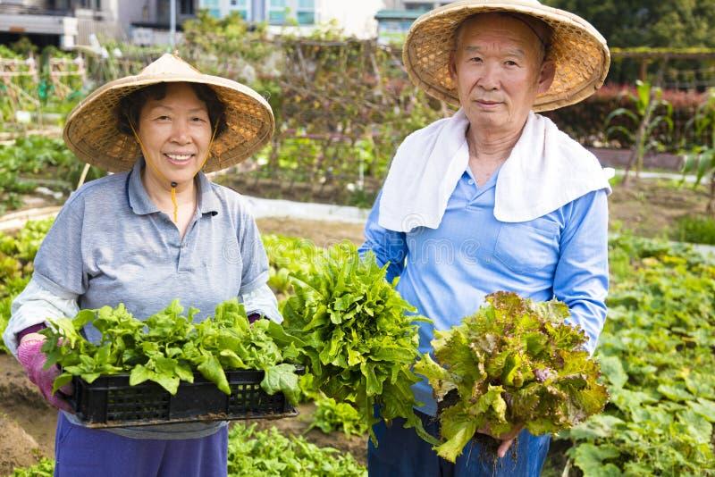 Pares superiores felizes que trabalham no jardim de vegetais imagens de stock royalty free