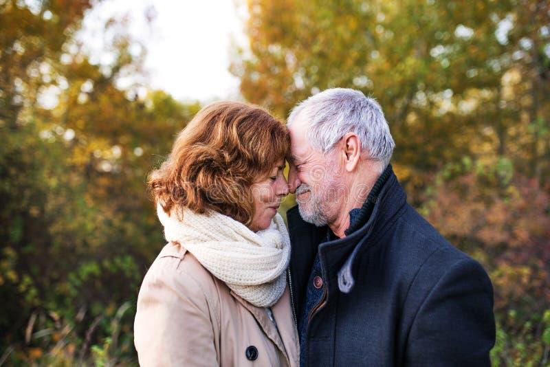 Pares superiores no amor em uma natureza do outono, narizes tocantes imagem de stock