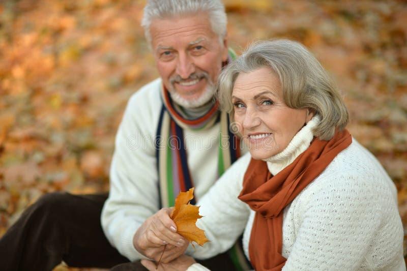 Pares superiores no parque do outono imagens de stock royalty free