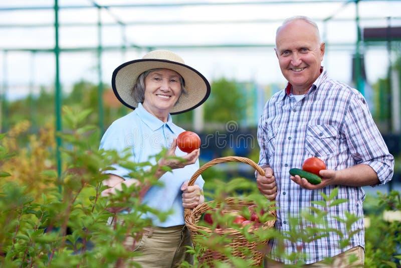Pares superiores orgulhosos que mostram legumes frescos no jardim imagem de stock royalty free