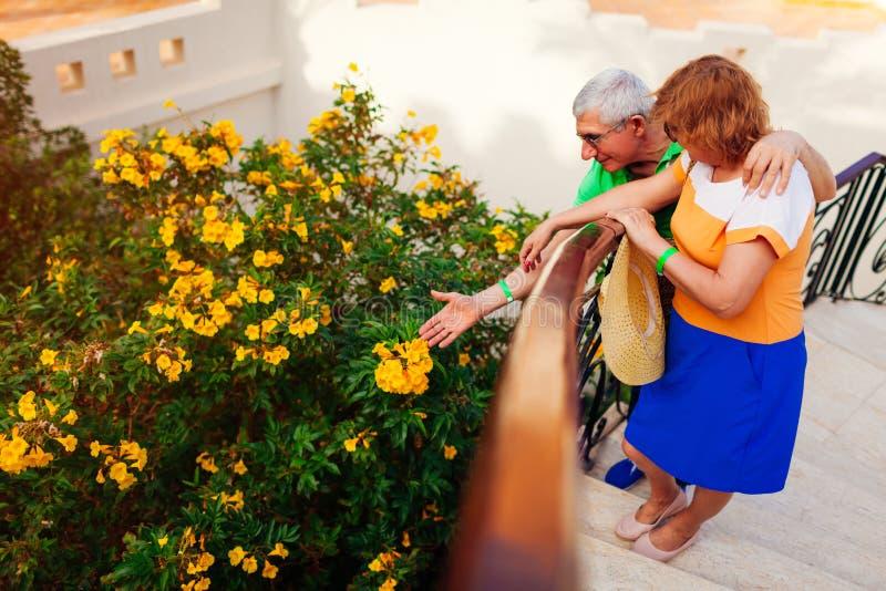 Pares superiores que admiram flores amarelas de florescência no jardim do hotel Povos que apreciam f?rias Conceito de viagem imagem de stock royalty free