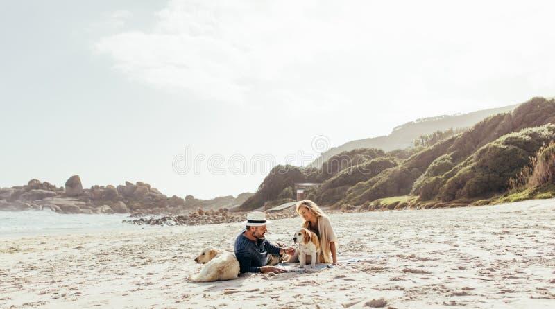 Pares superiores que relaxam na praia com cães de estimação imagens de stock